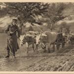 Транспорт муниције са Грададе, код Ниша 1915