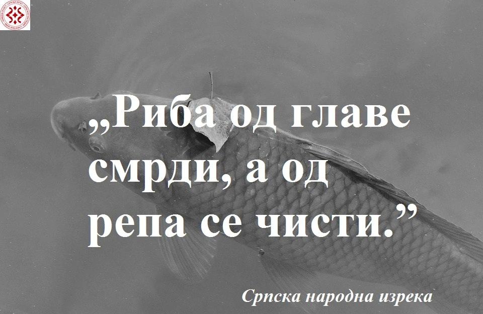 carp-3315526_960_720