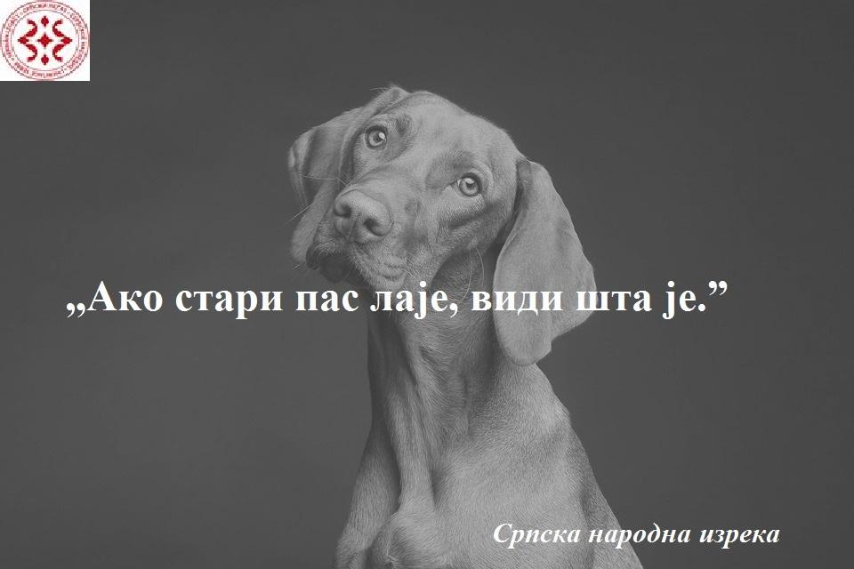 dog-3277416_960_720