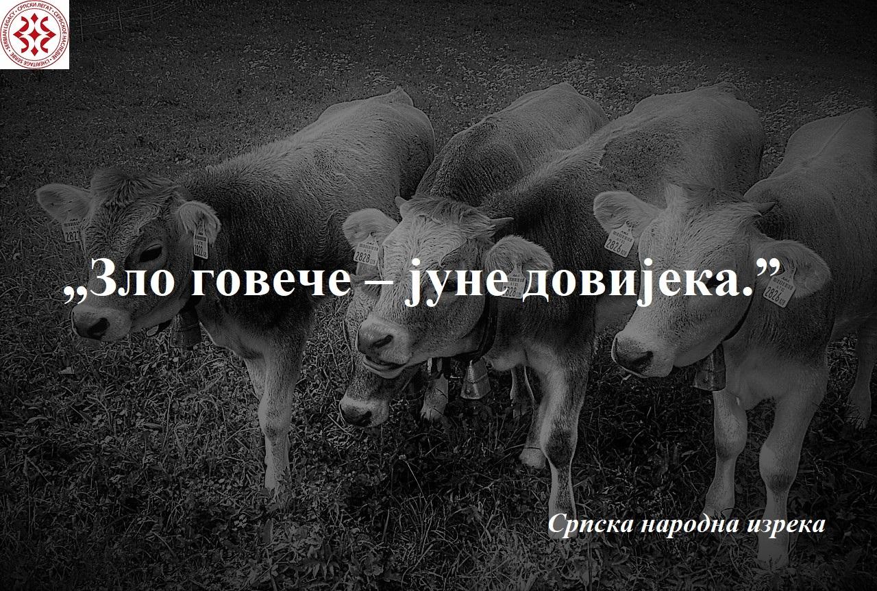 calves-2334305_1280