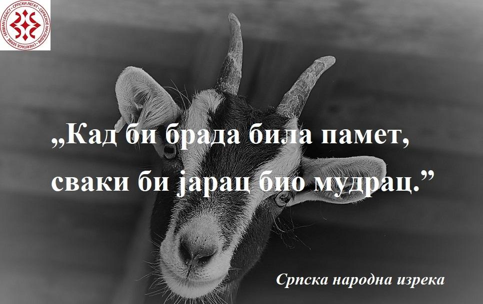 goat-3613728_1280