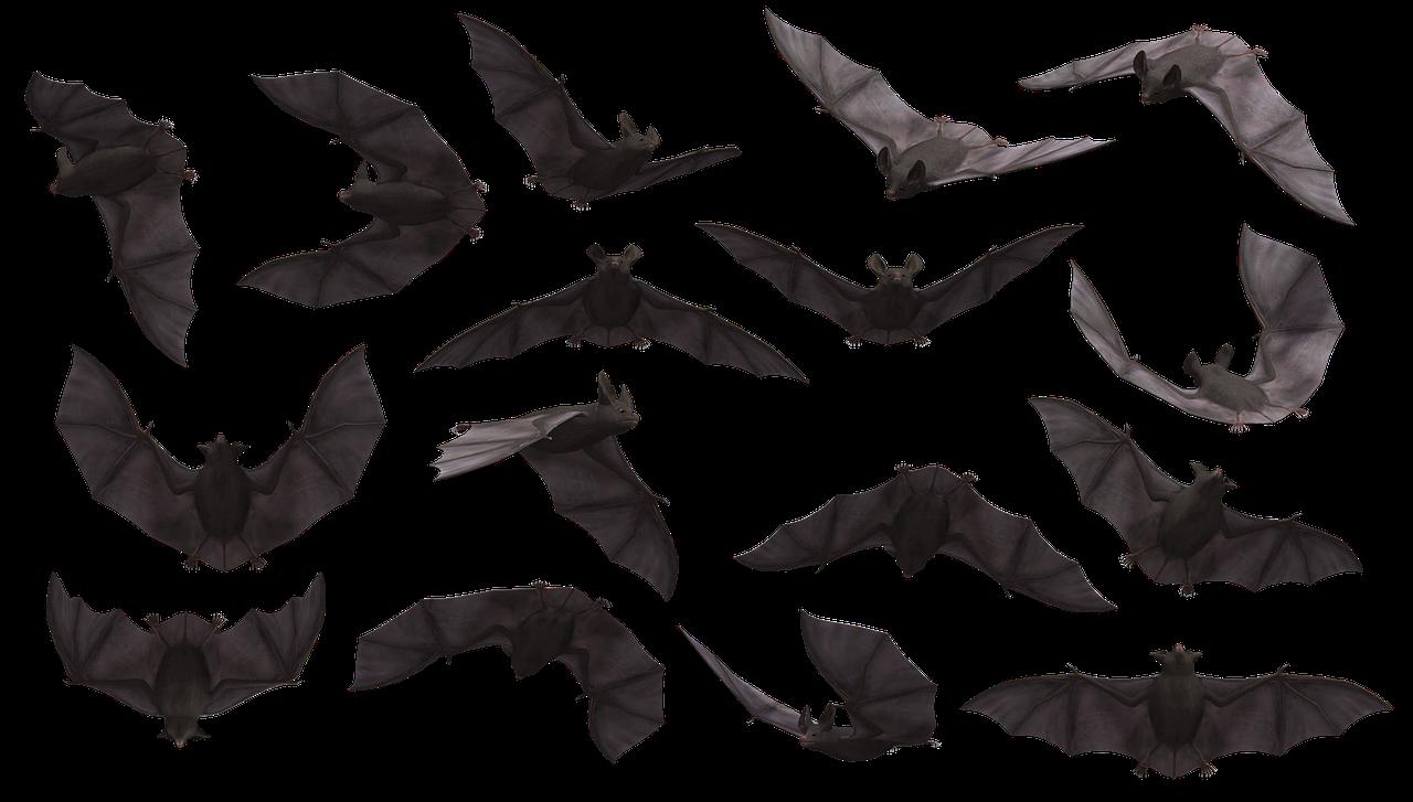 bat-3369882_1280