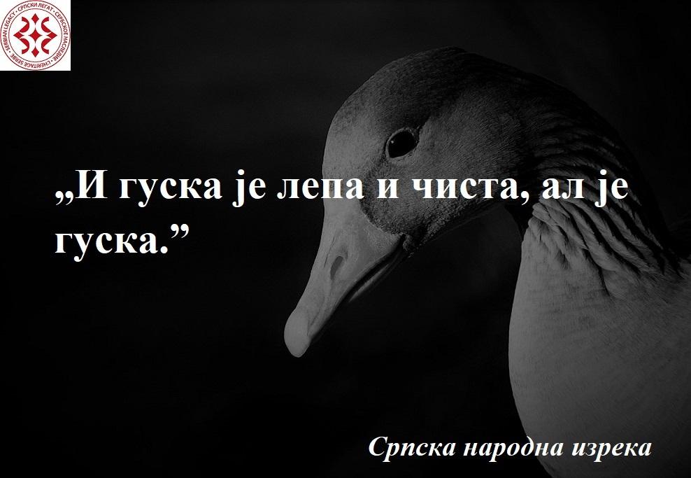 greylag-goose-1260334_1280