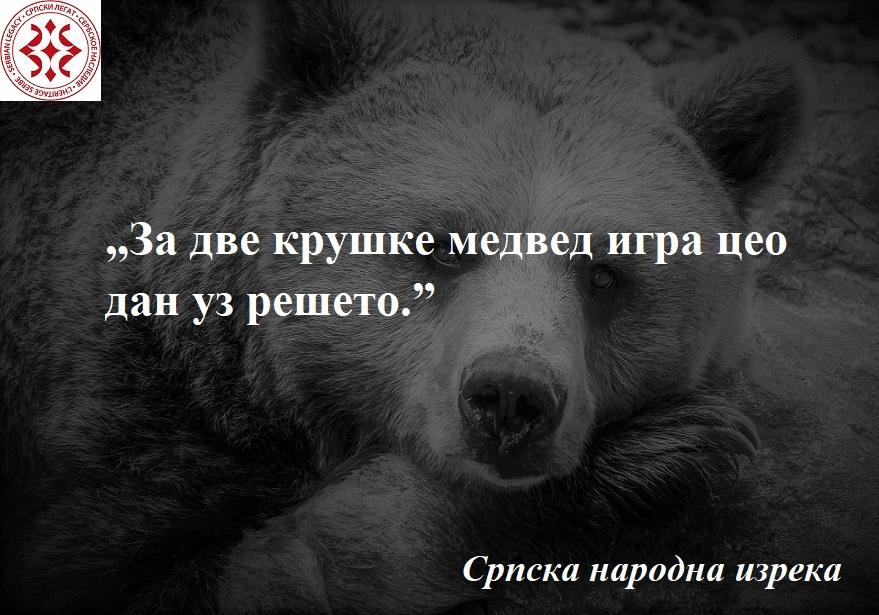bear-838688_1280